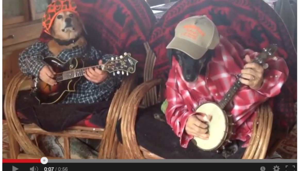 Dogs Play Bluegrass   YouTube